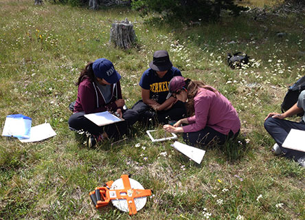 Citizen scientists help Rachel and her partners to answer key questions about how climate change is impacting meadow ecosystems.